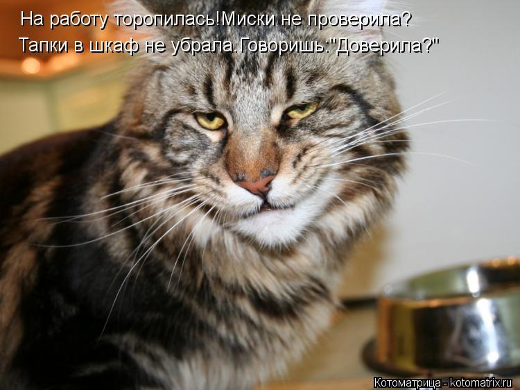 """Котоматрица: На работу торопилась!Миски не проверила? Тапки в шкаф не убрала.Говоришь:""""Доверила?"""""""