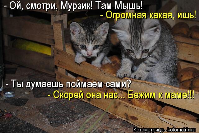 Котоматрица: - Ой, смотри, Мурзик! Там Мышь! - Огромная какая, ишь! - Ты думаешь поймаем сами? - Скорей она нас... Бежим к маме!!!