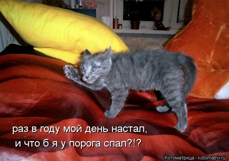 Котоматрица: раз в году мой день настал, и что б я у порога спал?!?
