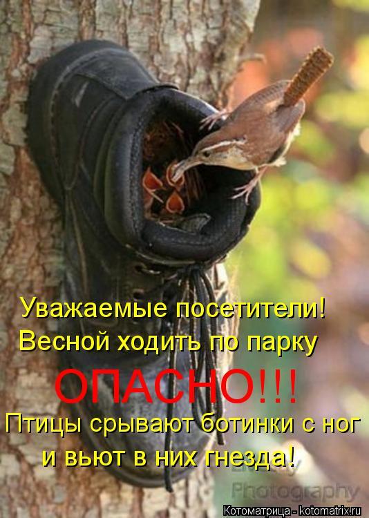 Котоматрица: Уважаемые посетители! Весной ходить по парку ОПАСНО!!! Птицы срывают ботинки с ног и вьют в них гнезда!