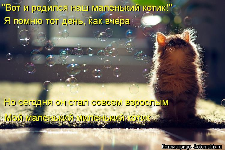 """Котоматрица: """"Вот и родился наш маленький котик!"""" Я помню тот день, как вчера Но сегодня он стал совсем взрослым Мой маленький миленький котик"""