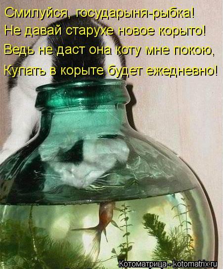 Котоматрица: Смилуйся, государыня-рыбка! Не давай старухе новое корыто! Ведь не даст она коту мне покою, Купать в корыте будет ежедневно!