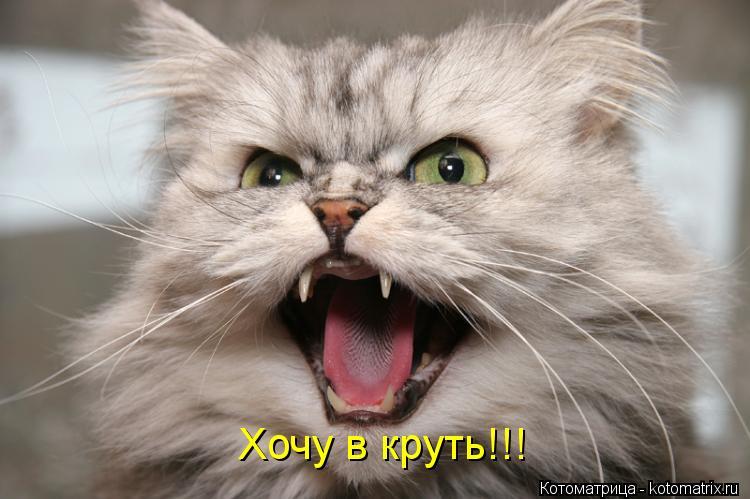Котоматрица: Хочу в круть!!!