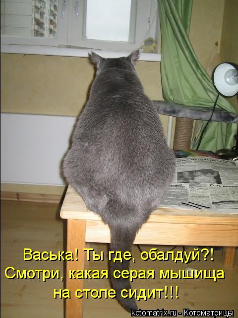 Котоматрица: Смотри, какая серая мышища  на столе сидит!!! Васька! Ты где, обалдуй?!