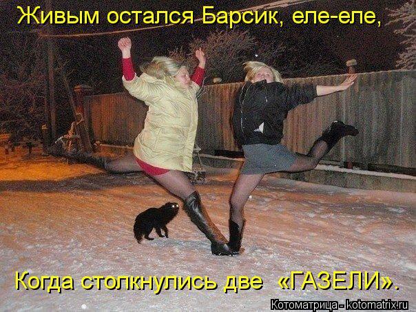 Котоматрица: Живым остался Барсик, еле-еле, Когда столкнулись две  «ГАЗЕЛИ».