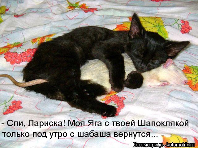 Котоматрица: - Спи, Лариска! Моя Яга с твоей Шапоклякой только под утро с шабаша вернутся...