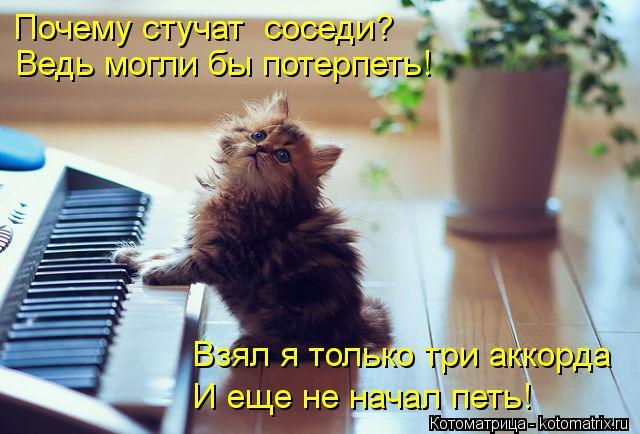 Котоматрица: Почему стучат  соседи? Ведь могли бы потерпеть! Взял я только три аккорда И еще не начал петь!