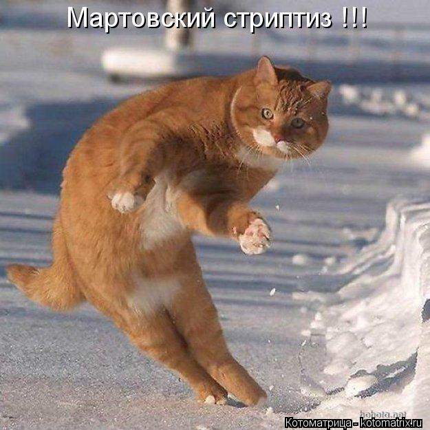 Котоматрица: Мартовский стриптиз !!!