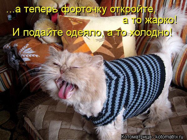 Котоматрица: ...а теперь форточку откройте, а то жарко! И подайте одеяло, а то холодно!