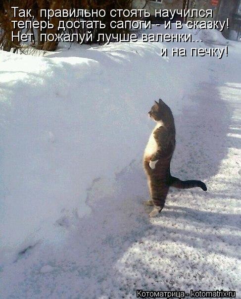 Котоматрица: Так, правильно стоять научился теперь достать сапоги - и в сказку! Нет, пожалуй лучше валенки... и на печку!