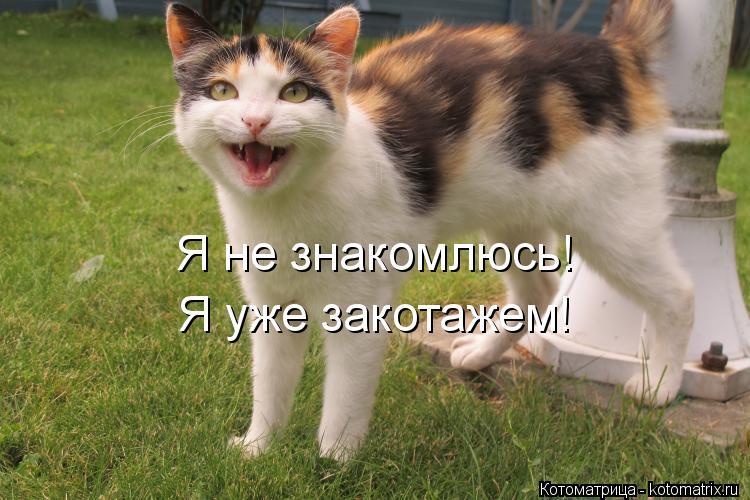 Котоматрица: Я не знакомлюсь! Я уже закотажем!