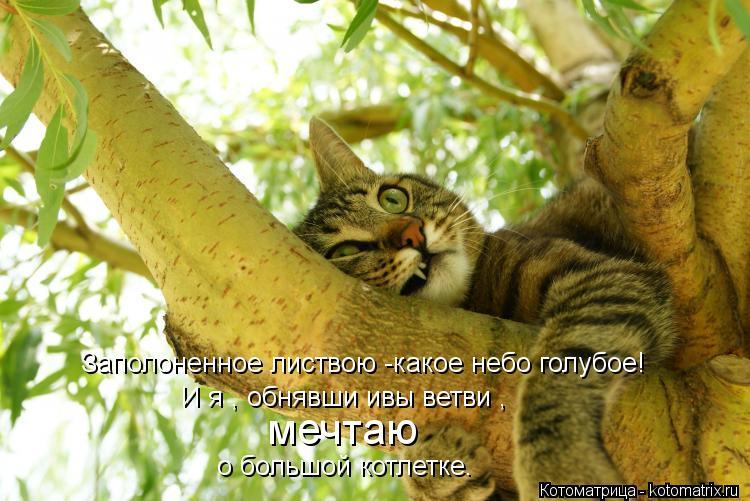 Котоматрица: Заполоненное листвою -какое небо голубое! И я , обнявши ивы ветви , мечтаю о большой котлетке.
