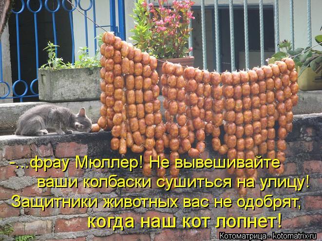 Котоматрица: -...фрау Мюллер! Не вывешивайте ваши колбаски сушиться на улицу! Защитники животных вас не одобрят, когда наш кот лопнет!