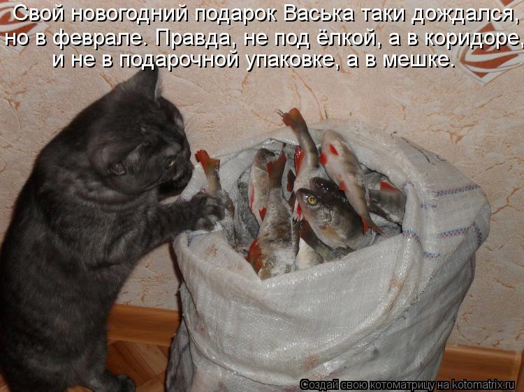 Котоматрица: Свой новогодний подарок Васька таки дождался,  и не в подарочной упаковке, а в мешке.   но в феврале. Правда, не под ёлкой, а в коридоре,