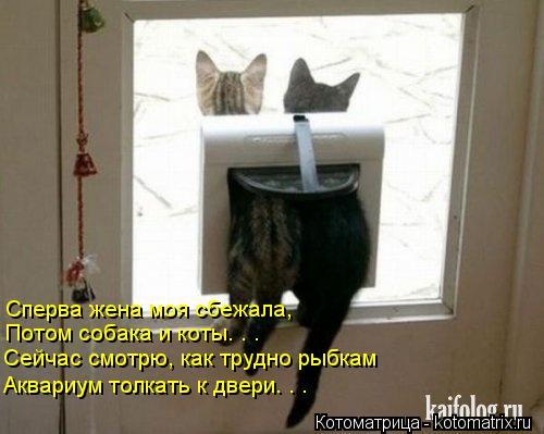 Котоматрица: Сперва жена моя сбежала,  Потом собака и коты. . .  Сейчас смотрю, как трудно рыбкам Аквариум толкать к двери. . .