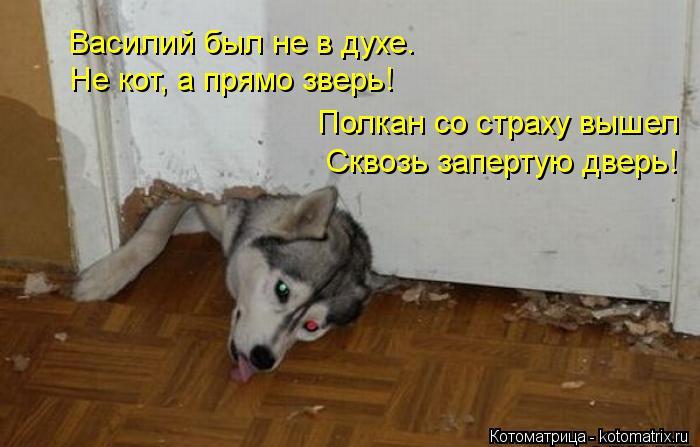 Котоматрица: Василий был не в духе.   Полкан со страху вышел  Сквозь запертую дверь! Не кот, а прямо зверь!