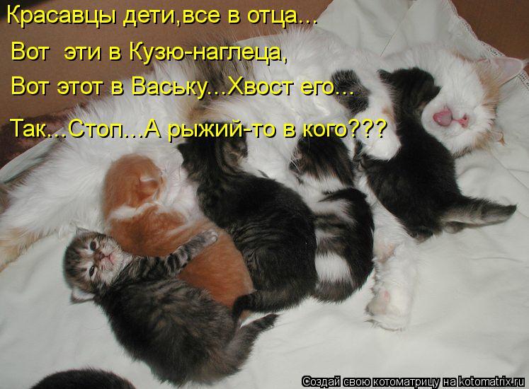 Котоматрица: Красавцы дети,все в отца... Вот  эти в Кузю-наглеца, Вот этот в Ваську...Хвост его... Так...Стоп...А рыжий-то в кого???