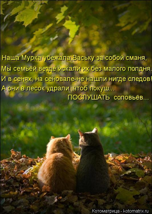 Котоматрица: Наша Мурка убежала,Ваську за собой сманя, Мы семьёй везде искали их без малого полдня. И в сенях, на сеновале-не нашли нигде следов! ПОСЛУШАТ