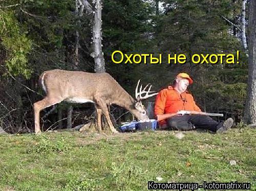 Котоматрица: Охоты не охота!