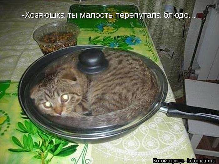 Котоматрица: -Хозяюшка ты малость перепутала блюдо....