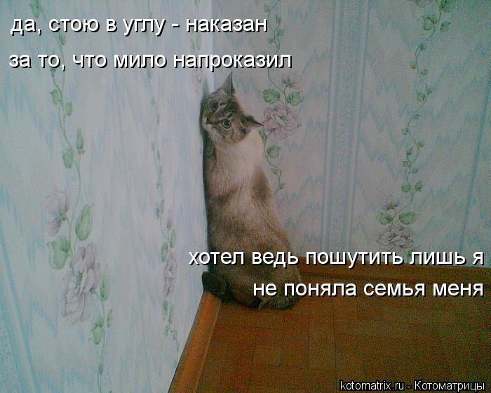 Котоматрица: да, стою в углу - наказан за то, что мило напроказил хотел ведь пошутить лишь я не поняла семья меня