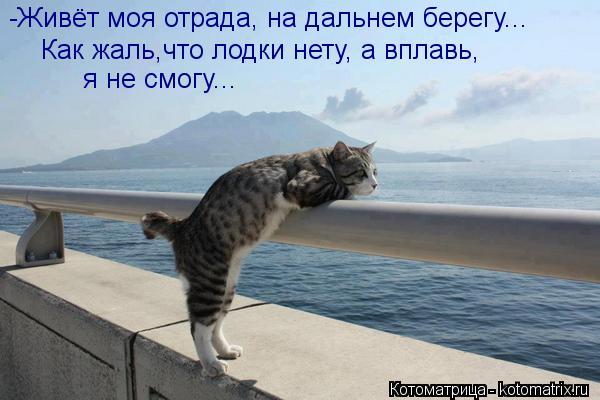 Котоматрица: -Живёт моя отрада, на дальнем берегу... Как жаль,что лодки нету, а вплавь, я не смогу...