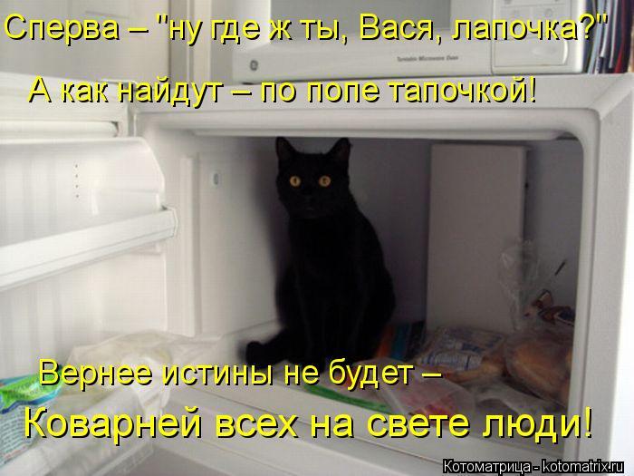 """Котоматрица: Сперва – """"ну где ж ты, Вася, лапочка?"""" А как найдут – по попе тапочкой! Вернее истины не будет –  Коварней всех на свете люди!"""