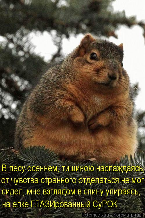 Котоматрица: В лесу осеннем, тишиною наслаждаясь, от чувства странного отделаться не мог: сидел, мне взглядом в спину упираясь,  на елке ГЛАЗИрованный Су