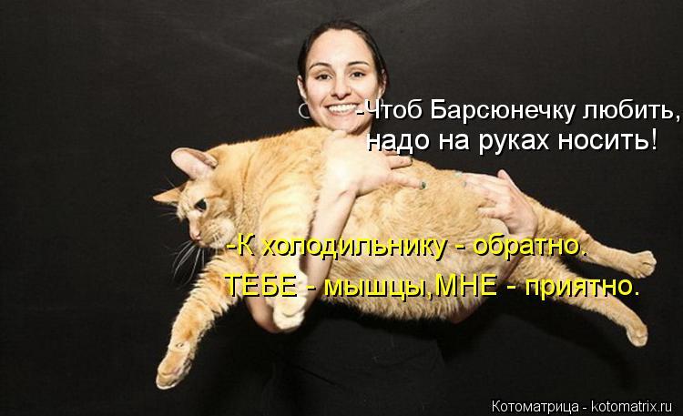 Котоматрица: -К холодильнику - обратно. ТЕБЕ - мышцы,МНЕ - приятно. надо на руках носить! -Чтоб Барсюнечку любить,