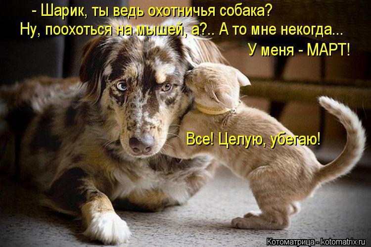 Котоматрица: - Шарик, ты ведь охотничья собака? Ну, поохоться на мышей, а?.. А то мне некогда...  У меня - МАРТ! Все! Целую, убегаю!