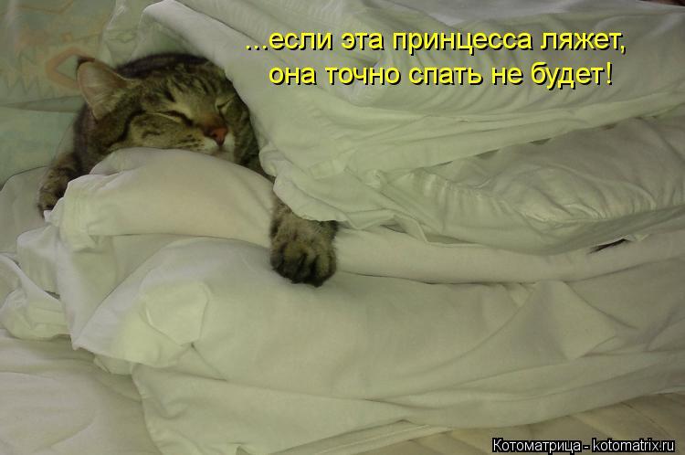Котоматрица: ...если эта принцесса ляжет, она точно спать не будет!