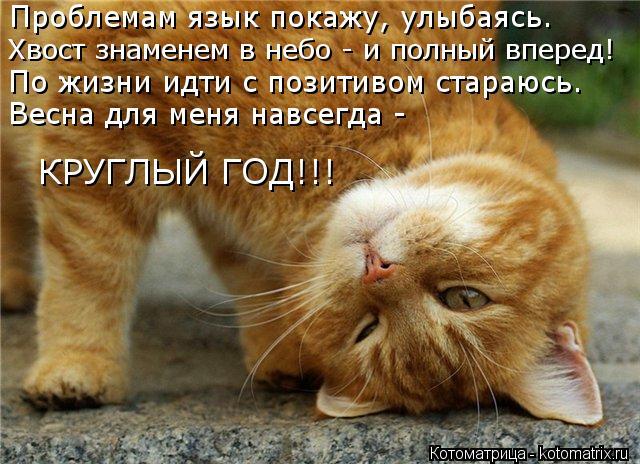 Котоматрица: Проблемам язык покажу, улыбаясь. Хвост знаменем в небо - и полный вперед! По жизни идти с позитивом стараюсь. Весна для меня навсегда - КРУГЛЫ