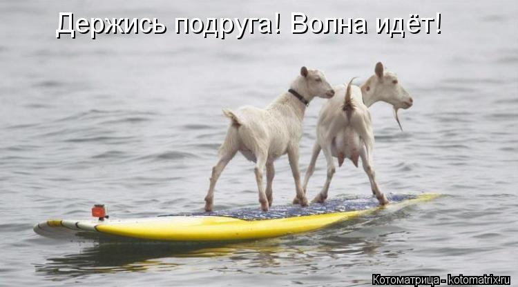 Котоматрица: Держись подруга! Волна идёт!