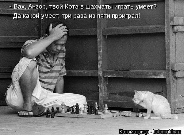 Котоматрица: - Вах, Анзор, твой Котэ в шахматы играть умеет? - Да какой умеет, три раза из пяти проиграл!
