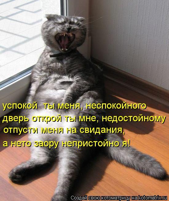 Котоматрица: дверь открой ты мне, недостойному отпусти меня на свидания, успокой  ты меня, неспокойного а нето заору непристойно я!