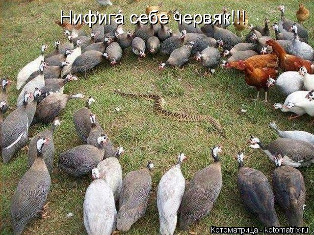 Котоматрица: Нифига себе червяк!!!