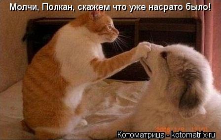 Котоматрица: Молчи, Полкан, скажем что уже насрато было!