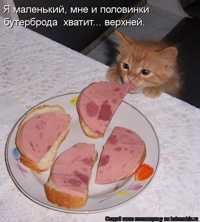 Котоматрица: Я маленький, мне и половинки  бутерброда  хватит... верхней.