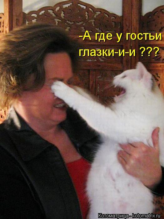 Котоматрица: -А где у гостьи глазки-и-и ???