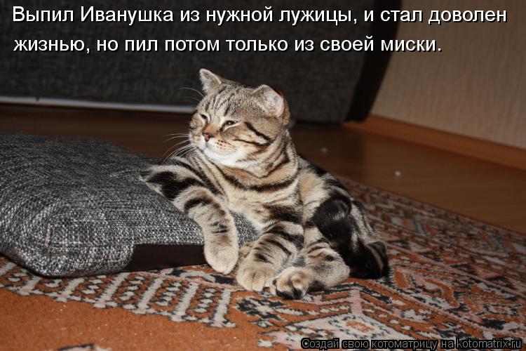 Котоматрица: Выпил Иванушка из нужной лужицы, и стал доволен  жизнью, но пил потом только из своей миски.