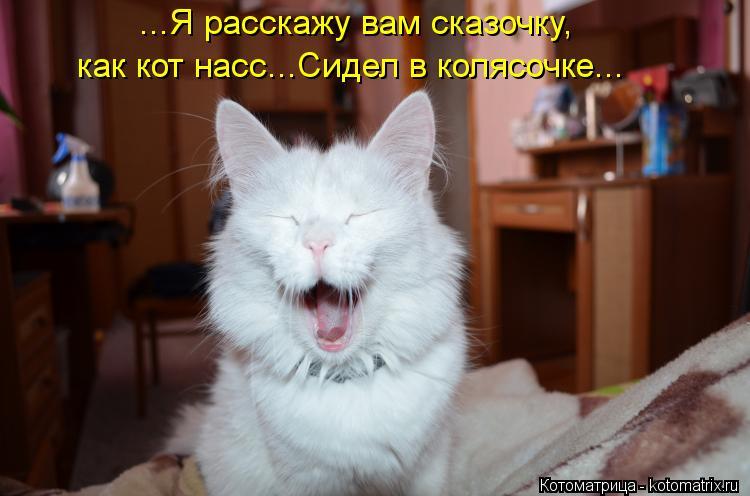 Котоматрица: ...Я расскажу вам сказочку, как кот насс...Сидел в колясочке...