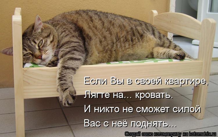 Котоматрица: Если Вы в своей квартире, Лягте на... кровать. И никто не сможет силой Вас с неё поднять...