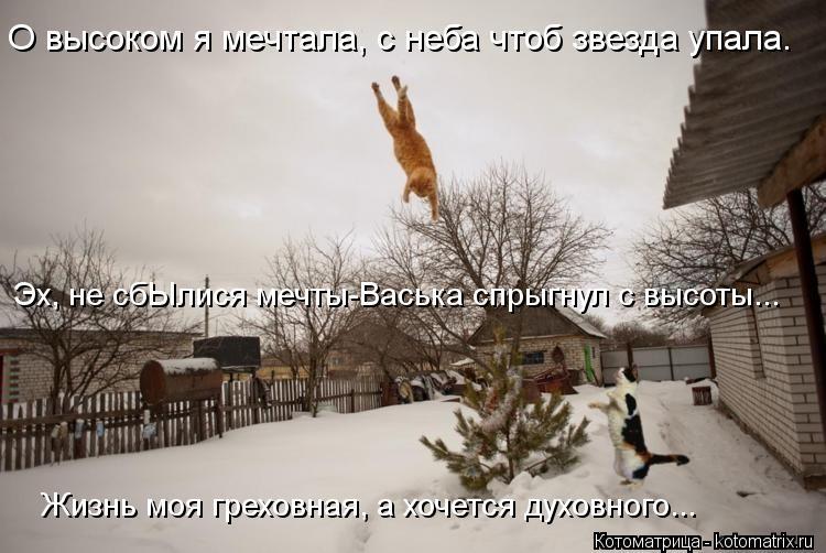 Котоматрица: О высоком я мечтала, с неба чтоб звезда упала. Эх, не сбЫлися мечты-Васька спрыгнул с высоты... Жизнь моя греховная, а хочется духовного...