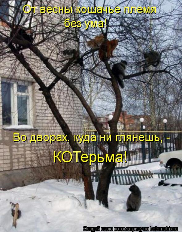 Котоматрица: От весны кошачье племя  без ума! Во дворах, куда ни глянешь, -  КОТерьма!