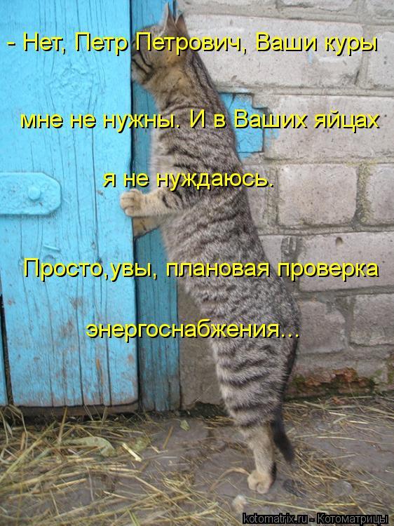 Котоматрица: - Нет, Петр Петрович, Ваши куры мне не нужны. И в Ваших яйцах я не нуждаюсь. Просто,увы, плановая проверка энергоснабжения...