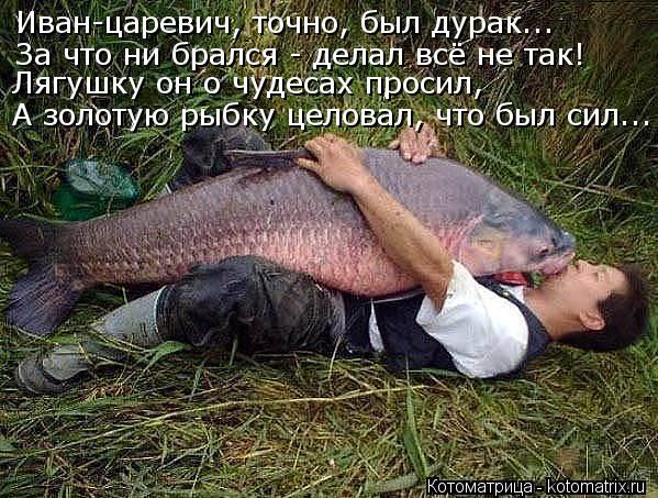 Котоматрица: Иван-царевич, точно, был дурак... За что ни брался - делал всё не так! Лягушку он о чудесах просил, А золотую рыбку целовал, что был сил...