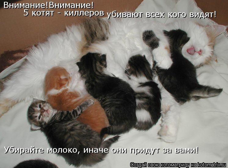 Котоматрица: Внимание!Внимание! 5 котят - киллеров убивают всех кого видят! Убирайте молоко, иначе они придут за вами!