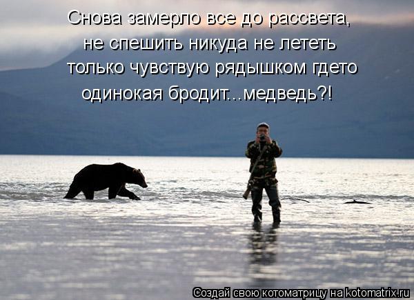 Котоматрица: Снова замерло все до рассвета, не спешить никуда не лететь только чувствую рядышком гдето одинокая бродит...медведь?!