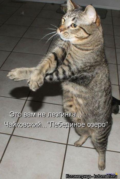 """Котоматрица: Это вам не лезгинка... Чайковский...""""Лебединое озеро"""""""