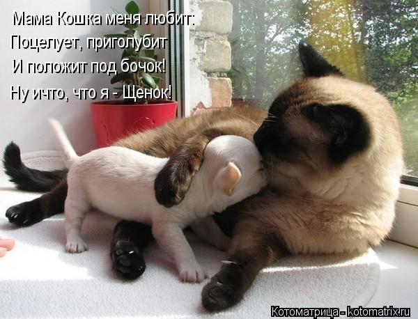 Котоматрица: Мама Кошка меня любит: И положит под бочок! Ну ичто, что я - Щенок! Поцелует, приголубит